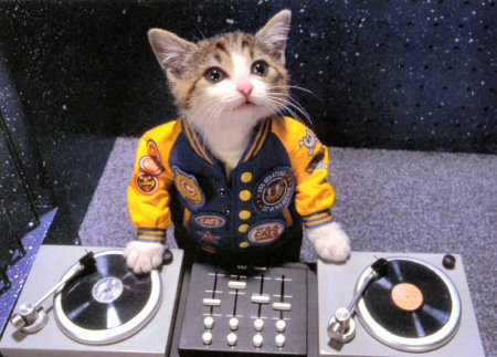 http://www.infendo.com/wp-content/uploads/2011/03/dj-kitty.jpg